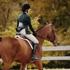 Horse - Equine Club